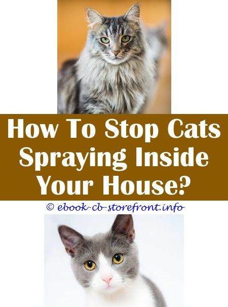 6 Grand Clever Hacks Spraying Your Cat Cat Pheromone Spray Calming Homemade Lemon Flea Spray For Cats How To Keep A Cat From Spraying Spray To Stop Cats Scratc