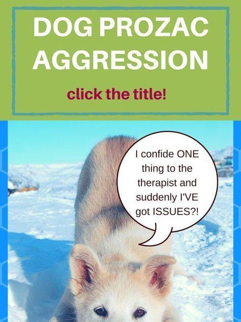 Dog Prozac Aggression Faq S Aggressive Dog Dog Training Meds