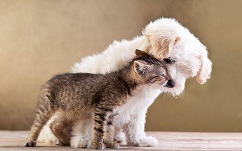 Chi Lha Detto Che Cane E Gatto Non Possono Essere Amici Dog Cat