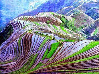 Campo Colgante Del Arroz Yunnan China Imágenes