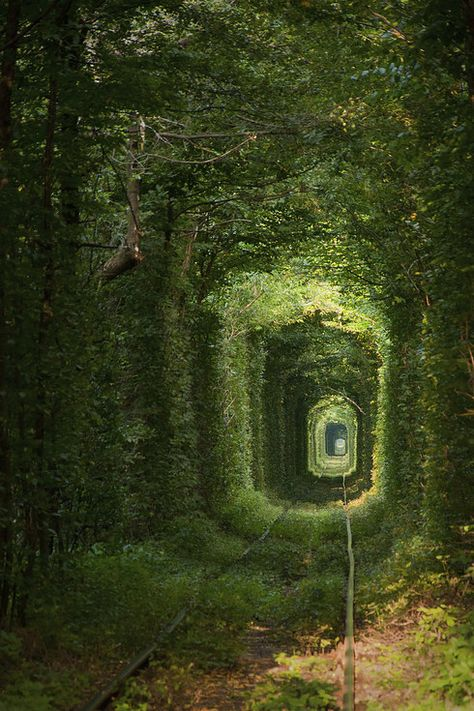 Most Dark And Mysterious Places On Earth Found deep in the forests of Ukraine, the Tunnel of Love was formerly used to transport industrial goods from a nearby factory.Found deep in the forests of Ukraine, the Tunnel of Love was formerly used to transport Mysterious Places On Earth, Beautiful World, Beautiful Places, Enchanted Tree, Witches Of East End, Tree Tunnel, Abandoned Places, Abandoned Castles, Haunted Places