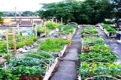 Garden Design For Organic Vegetable Gardens Elegant Ve Able Gardening Blog Organic Vegetable Garden Planner Vertical Vegetable Gardens Organic Vegetable Garden