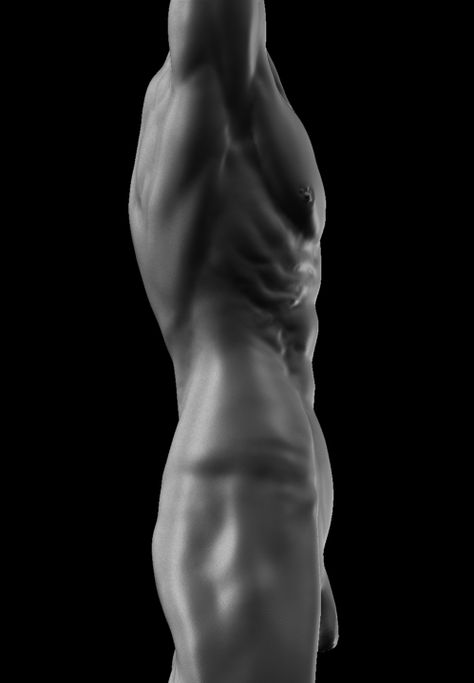 Image result for male torso anatomy reference | References | Pinterest