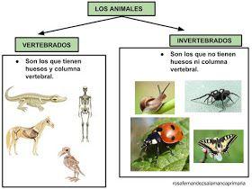 Maestra De Primaria Animales Vertebrados E Invertebrados Clasificación Y Características Vídeo Vertebrados E Invertebrados Vertebrados Animales Vertebrados