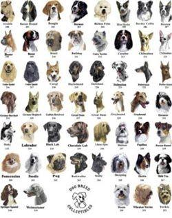 разныё породы собак фото