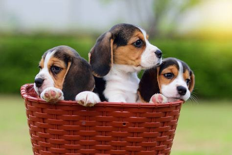 want to train your dog so they can obey you? check out my site for more info  cute tiny beagle dog best dog cute puppie cute dog hd wallpaper cute tiny dog best dog adorable puppie cute dog hd wallpaper tiny dog dog selfies smartest dogs dog actives  weeny dogs  dog in heaven savage dogs danger dogs dog commandsi love dog best dog  adorable dog growling dog dog growling trained dogs  training your deshedding dog snarling dog  #cutedog#cutepuppies#pet#trainyourdog #beagle