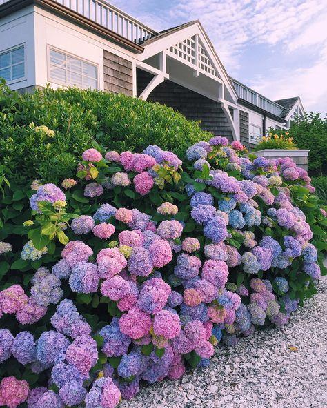 summer in New England // Newport, Rhode Island at peak hydrangea season Hortensia Hydrangea, Hydrangea Care, Hydrangeas, Climbing Hydrangea, Hydrangea Bush, Pink Hydrangea, Lavender Flowers, Spring Flowers, Hydrangea Season