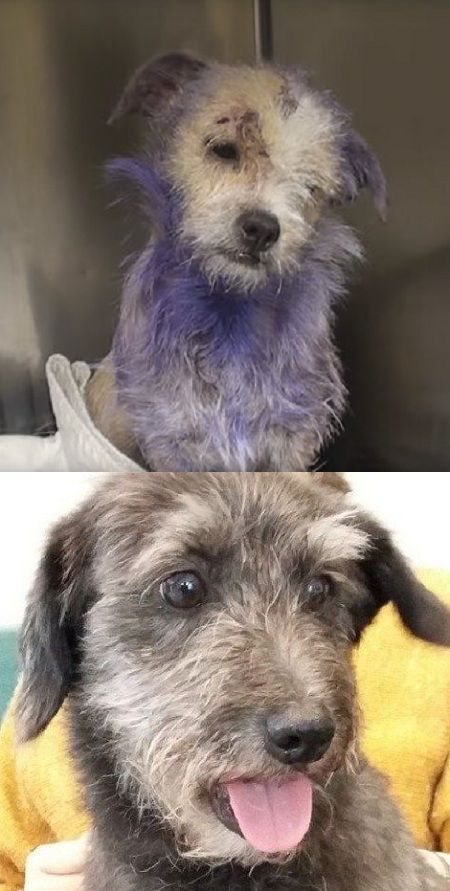 These Owners Preferred To Euthanize Their Dog For A Reason You Won T Believe Video Dog Dogs Pets Puppies Euthanize Dogs Cute Animals Dog Lovers