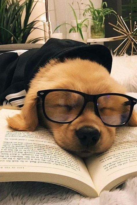 Sleepy Dog In 2021 Cute Baby Dogs Cute Animal Photos Cute Animal Pictures