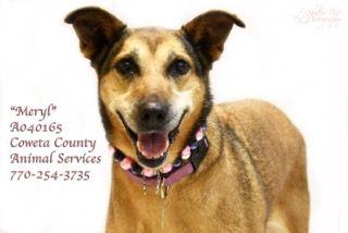 Dogs For Adoption Euthanization Rescue Sponsor Dog Adoption Dogs Petsmart Dog