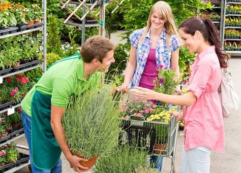 8 Common Mistakes To Avoid When Buying Plants From Nursery