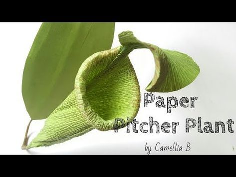 Diy How To Make Paper Pitcher Plant From Crepe Paper Easy And