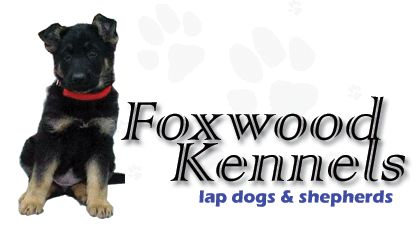 Foxwood Kennels Dog Breeders For Mix Pure Bred And German