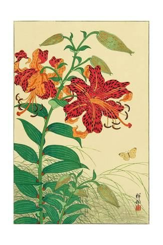 Giclee Print: Tiger Lilies and Butterfly by Koson Ohara : 24x16in