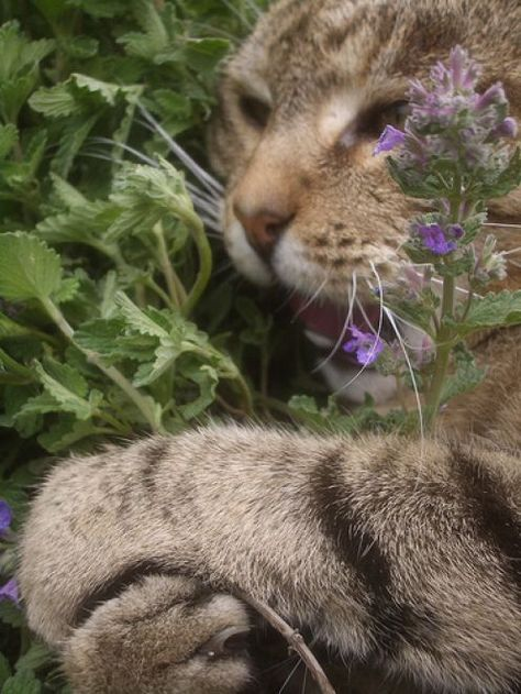 Mine All Mine Cat Safe Plants Cat Garden Catnip Plant
