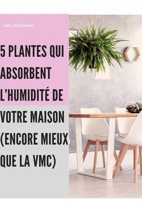 5 PLANTES QUI ABSORBENT L\'HUMIDITE DE TOUTES LES PIECES ...