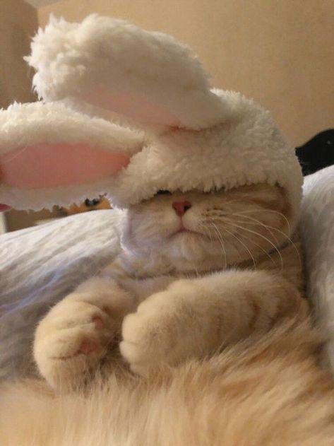 Cute Baby Cats, Cute Little Animals, Cute Funny Animals, Kittens Cutest, Cats And Kittens, Funny Cats, Cute Babies, Cute Cat Wallpaper, Cat Aesthetic