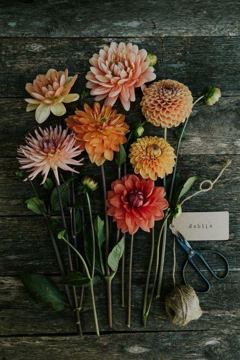 Dahlia bouquet – Blumen & Tischdekoration Ideen – – Best Garden Plants And Planting Wild Flowers, Beautiful Flowers, Bouquet Flowers, Dahlia Wedding Bouquets, Dahlia Flowers, Summer Flowers, Dalia Bouquet, Autumn Flowers, Fall Wedding Flowers