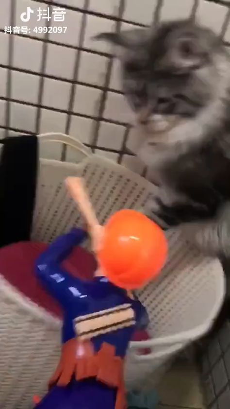 Funny and cute [3]-Source: Tiktok-Thank you very much! 😘Simple 60-Sec Habit That Reversed Type 2 Diabetes and Melted 56lbs of Fat - Click on the link in my website (profile) 😘 #cat #pets #funnycat #funnypets-Click Visit To Watch More Videos