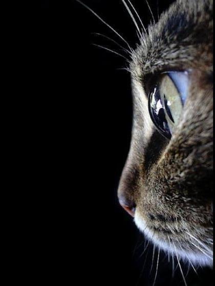 Pour Mieux Comprendre Votre Chat Comment Votre Chat Voit Il Dans L