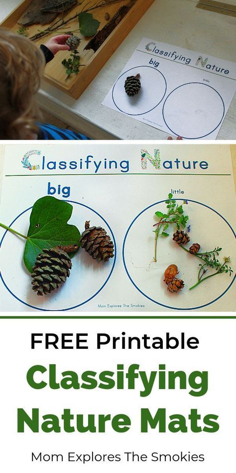 Fabulous kids printables for classifying and sorting nature. This learning activity helps students practice science, STEAM, STEM, and nature skills. #STEAM #naturelearning #naturetable