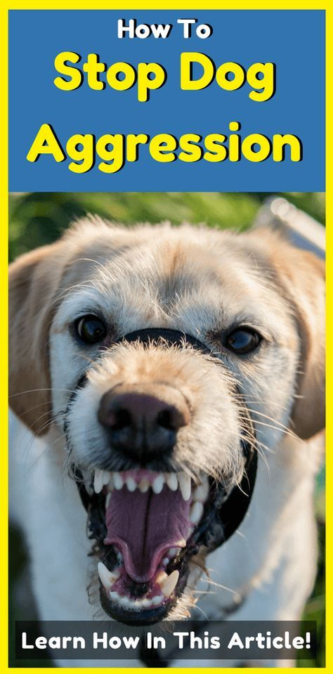 How To Stop Dog Aggression Aggressive Dog Dog Training Tips