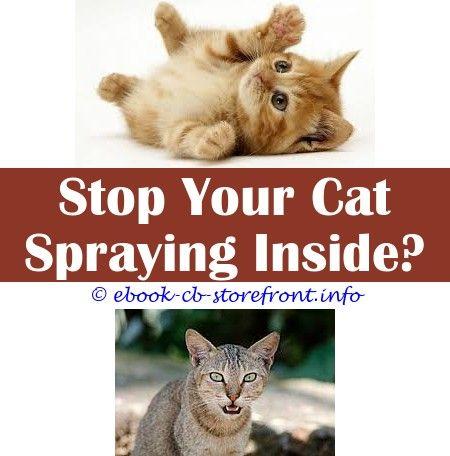 Pin En Cat Spray Cleanses