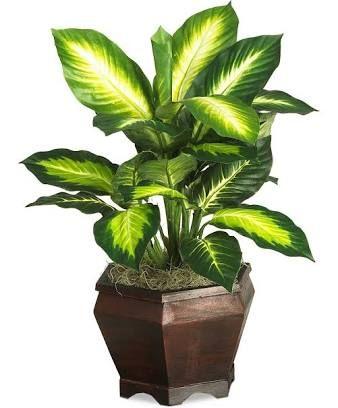 Aglaonema Google Search Artificial Plants Small Artificial Plants Silk Plants