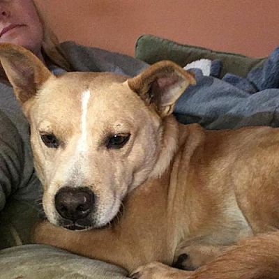 Seattle Wa Beagle Meet Blitzen A Pet For Adoption Adopt Me
