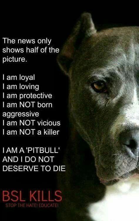 Pit Bulls Are So Misunderstood Pitbullquotes Pitbulls Pitbull