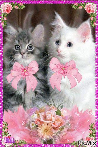 2 cute cats.
