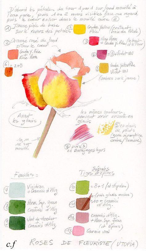 Petites Lecons Palette Aquarelle Fruits Aquarelle Aquarelle