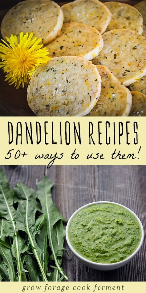 Dandelion flowers are edible and medicinal and have many uses Here are 50 dandelion recipes for drinks sweets baked goods savory dishes bath and body and home remedies dandelion flower recipes # Dandelion Recipes, Vegan Recipes, Cooking Recipes, Homemade Wine Recipes, Herb Recipes, Cooking Pork, Steak Recipes, Drink Recipes, Edible Wild Plants