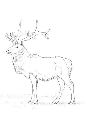 Deer Coloring Page Deer Coloring Pages Zoo Animal Coloring Pages Horse Coloring Pages