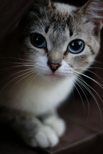 One Small Cat Changes Coming Home To An Empty House To Coming Home Pam Brown Pretty Cats Cute Cats Beautiful Cats