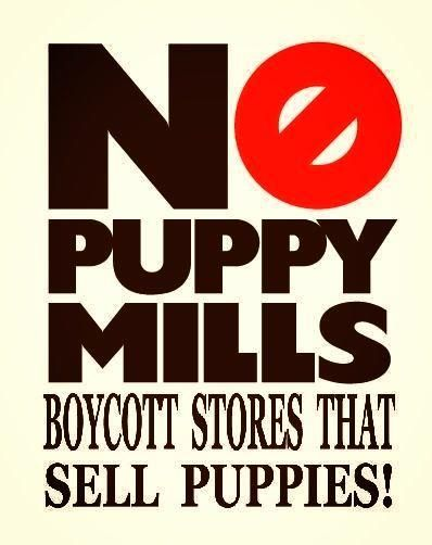 A breeding dog will live its ENTIRE life caged up with the sole purpose of producing puppies. There is a reason you won't ever meet that puppy's mom. Please boycott puppy mills, puppy stores, and pet stores that sell puppies.