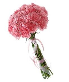 Heavenly Carnations Their History And Varieties Carnations Carnation Bouquet Carnation Flower