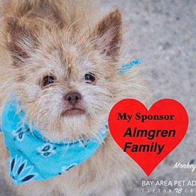 San Leon Tx Monkey Is A Cairn Terrier For Adoption In San Leon Tx Who Needs A Loving Home Kitten Adoption Pets Cairn Terrier Mix
