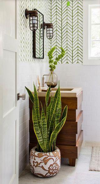 10 Plantes Parfaites Pour Egayer Votre Salle De Bain Plante
