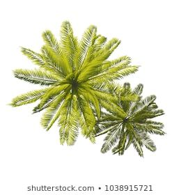 Trees Top View For Landscape Vector Illustration Tree Plan Photoshop Trees Top View Tree Plan Png
