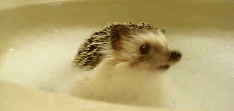 Enchanting Facts About Hedgehogs Hedgehogs Animal And - This instagram account will satisfy your addiction for adorable hedgehogs