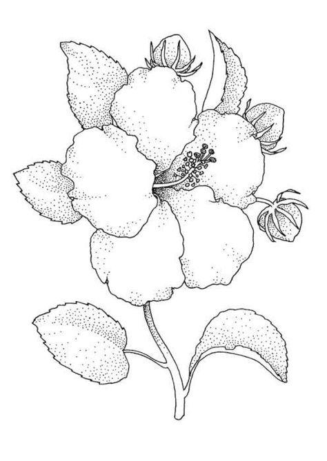 Hibiscus B Para Colorear Pinterest Dibujos De Flores Flor