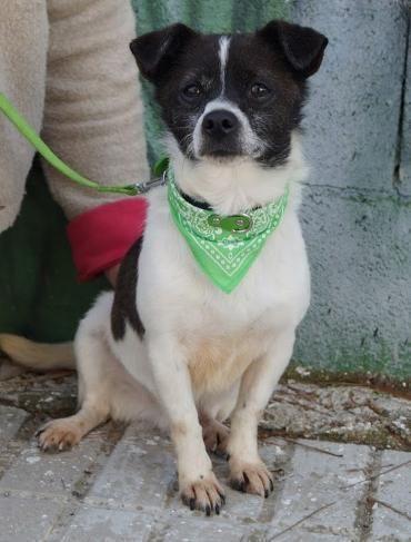 Hund Jack Russell Terrier Mischling Rude 4 Jahre Spanien Hunde Mischlinge Hunde Hunde Bilder