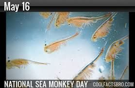 May 16 National Sea Monkey Day With Images Sea Monkeys Day National