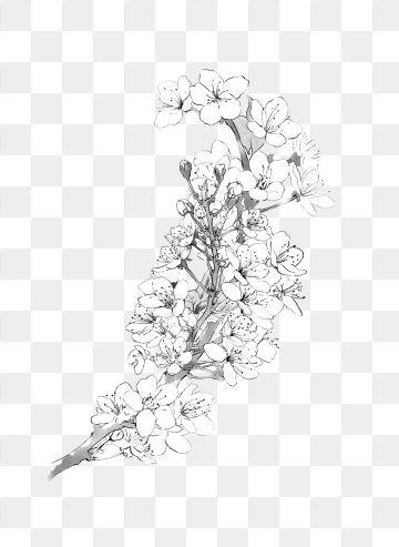 2020 的 Cherry Blossoms Pear Flower Flower Branch Black And White