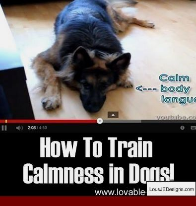 How To Train A Service Dog For Panic Attacks And Pics Of Best Way