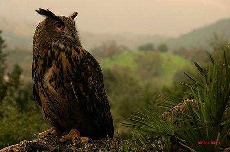 67 Ideas De Pájaros De España Pajaros Aves Fauna Europea