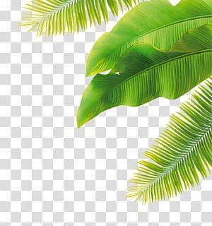 Fruit Flower Green Leaves Green Banana Leaves And Coconut Tree Leaves Transparent Background Png Clipart Watercolor Leaves Coconut Leaves Leaves