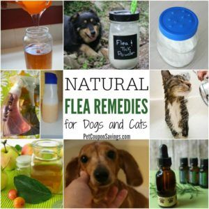 Homemade Flea Shampoo If You Want To Bathe Your Pet To Get Rid Of