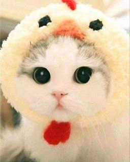 Kokamoka Kumpulan Gambar Kucing Kucing Lucu Ini Bikin Mood Bayi Kucing Kucing Menggambar Kucing